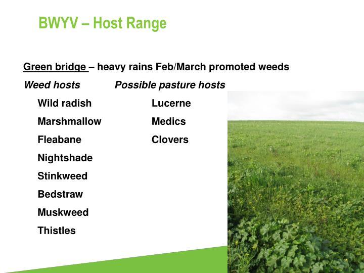 BWYV – Host Range