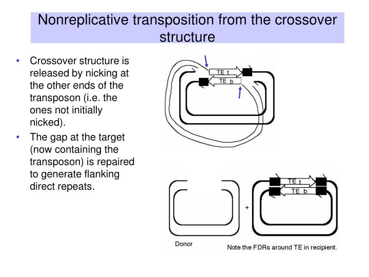 Nonreplicative transposition from the crossover structure