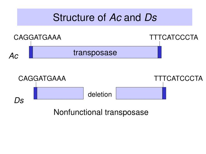 Structure of