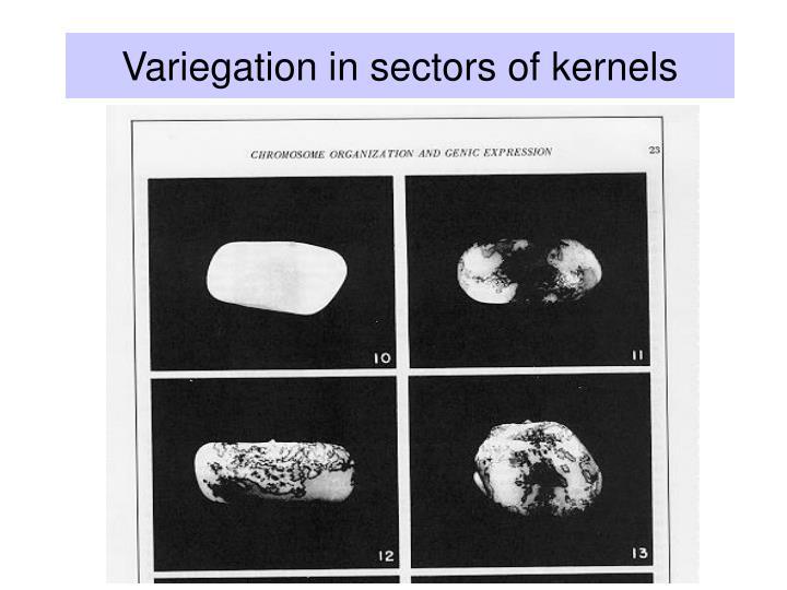 Variegation in sectors of kernels