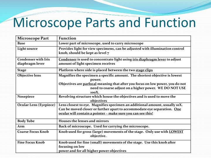 Microscope Parts and Function