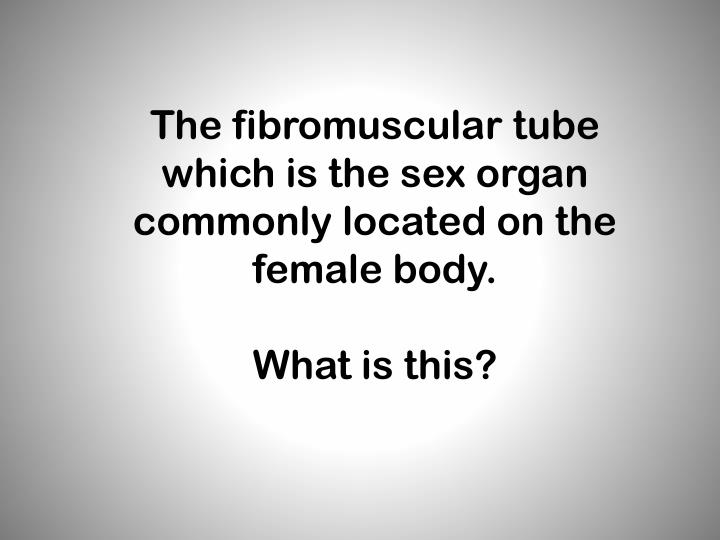 The fibromuscular tube which is the sex organ commonly located on the female body.