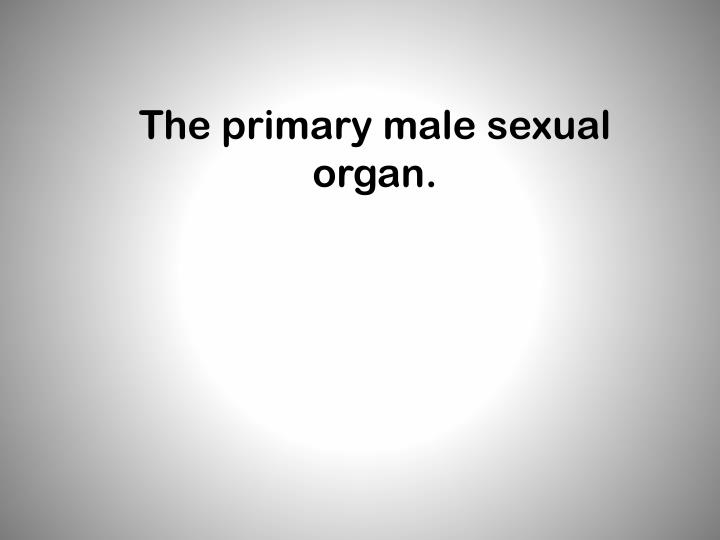 The primary male sexual organ.