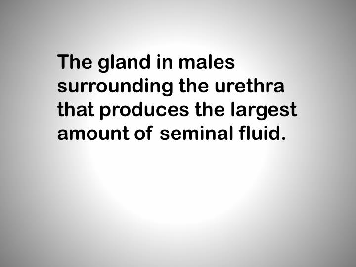 The gland in males surrounding the urethra that produces the largest amount of seminal fluid.