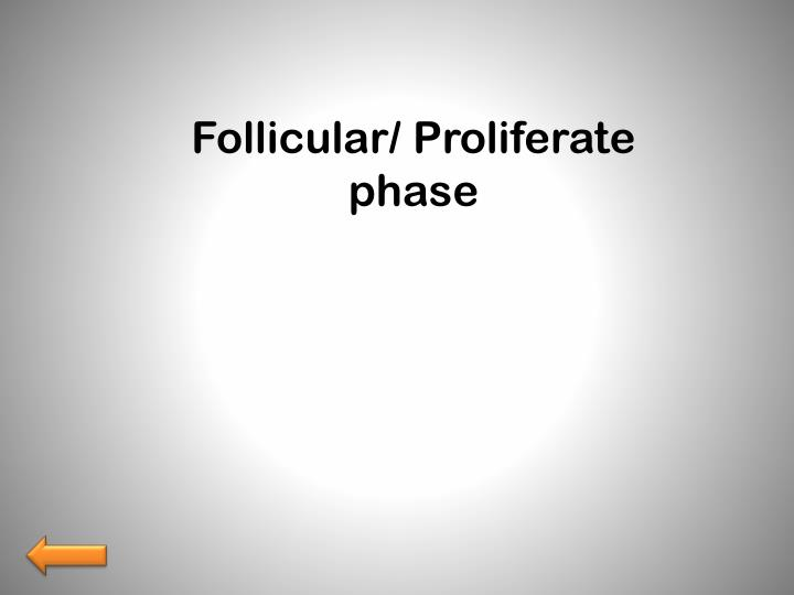Follicular/ Proliferate phase