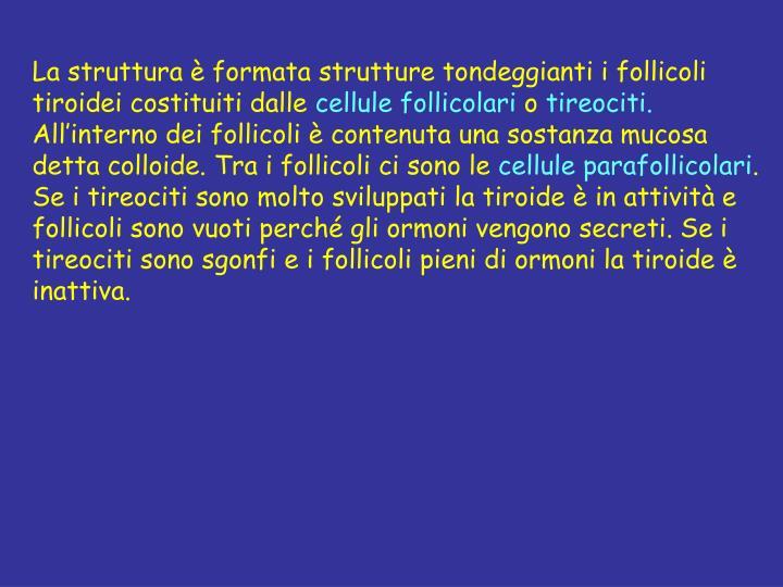La struttura è formata strutture tondeggianti i follicoli tiroidei costituiti dalle