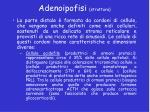 adenoipofisi struttura