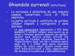 ghiandole surrenali struttura