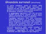 ghiandole surrenali struttura2