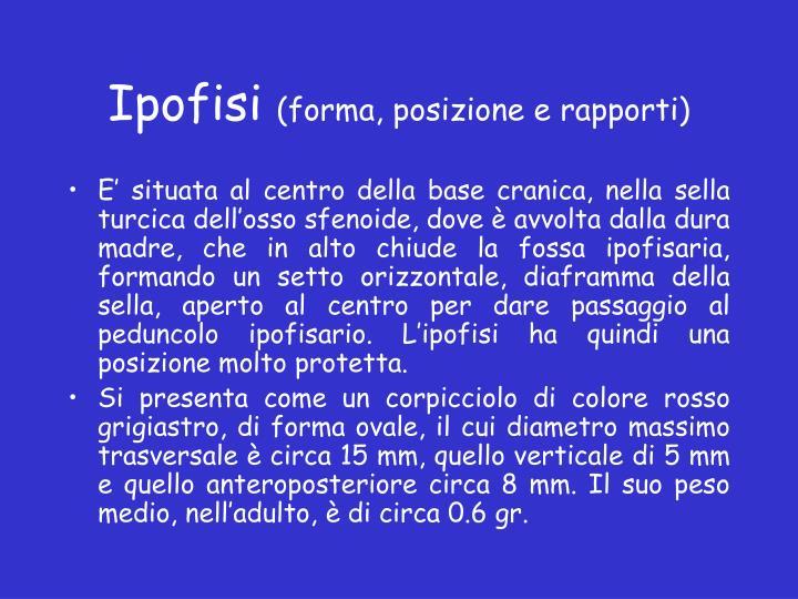 Ipofisi