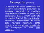 neuroipofisi struttura