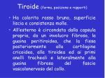 tiroide forma posizione e rapporti1