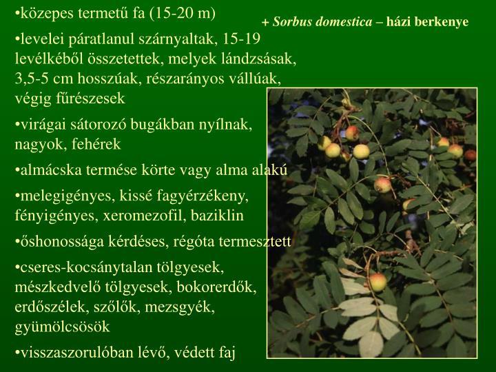 közepes termetű fa (15-20 m)