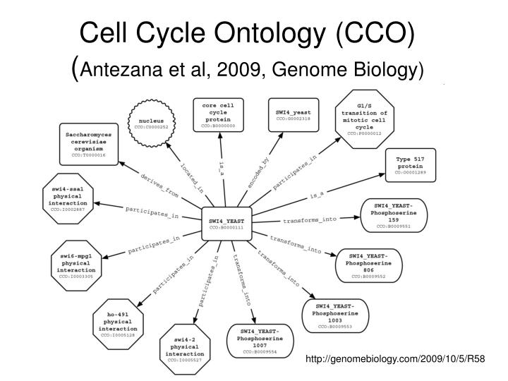 Cell Cycle Ontology (CCO)