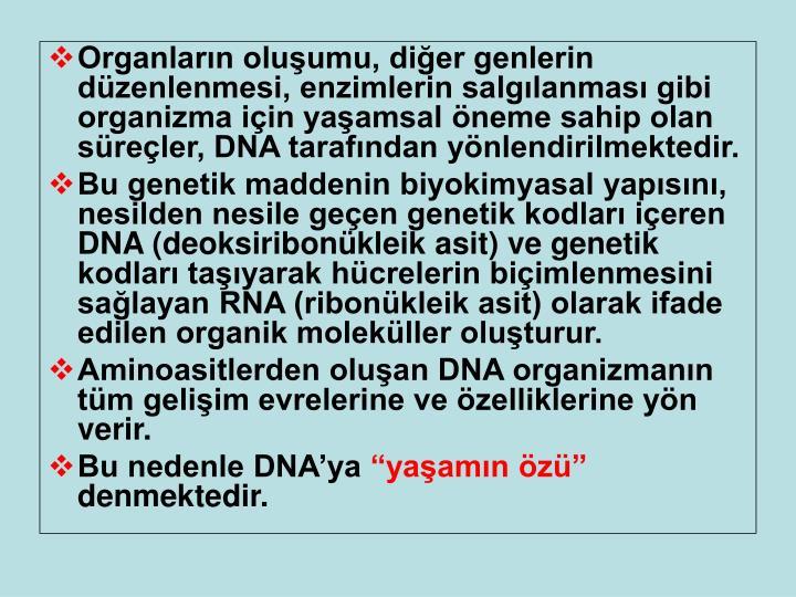 Organların oluşumu, diğer genlerin düzenlenmesi, enzimlerin salgılanması gibi organizma için yaşamsal öneme sahip olan süreçler, DNA tarafından yönlendirilmektedir.