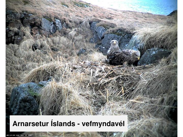 Arnarsetur Íslands - vefmyndavél