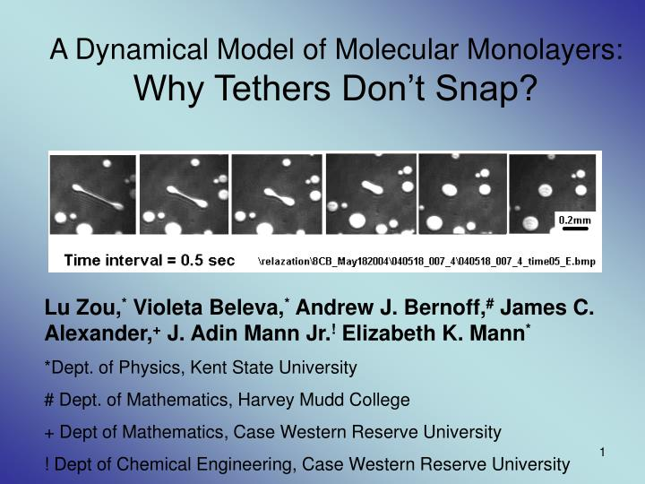 A dynamical model of molecular monolayers why tethers don t snap