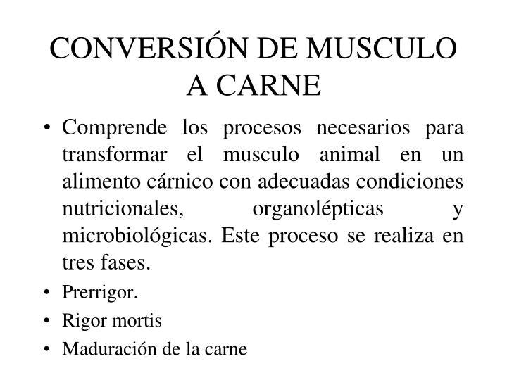 CONVERSIÓN DE MUSCULO A CARNE