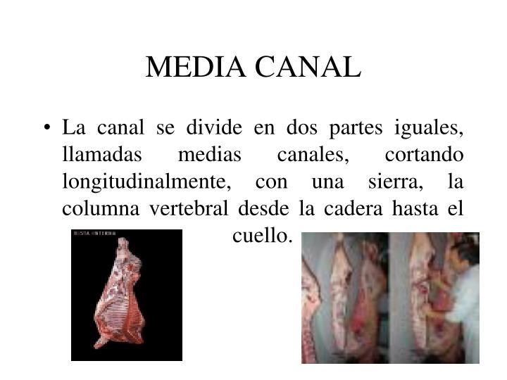 MEDIA CANAL