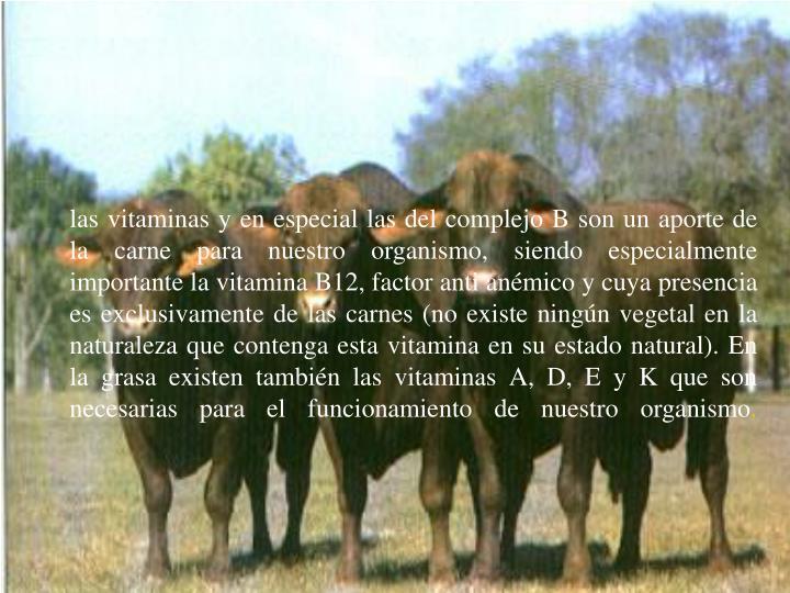 las vitaminas y en especial las del complejo B son un aporte de la carne para nuestro organismo, siendo especialmente importante la vitamina B12, factor anti anémico y cuya presencia es exclusivamente de las carnes (no existe ningún vegetal en la naturaleza que contenga esta vitamina en su estado natural). En la grasa existen también las vitaminas A, D, E y K que son necesarias para el funcionamiento de nuestro organismo