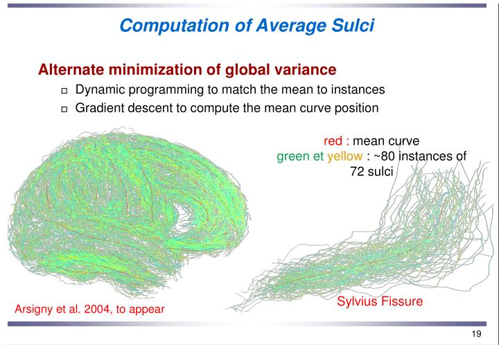 Computation of Average Sulci