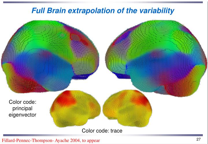Full Brain extrapolation of the variability