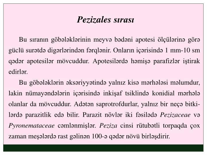 Pezizales