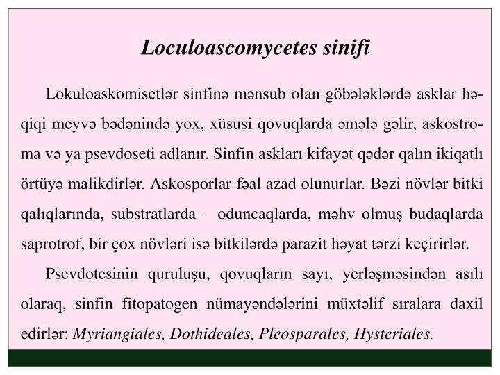 Loculoascomycetes