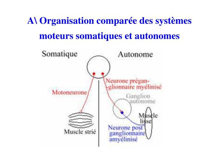 A\ Organisation comparée des systèmes moteurs somatiques et autonomes