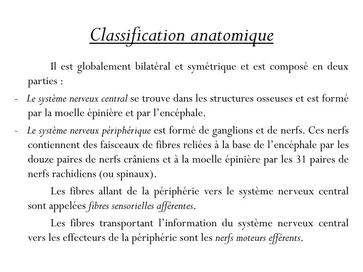Classification anatomique