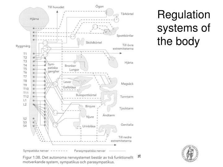 Regulation systems of the body