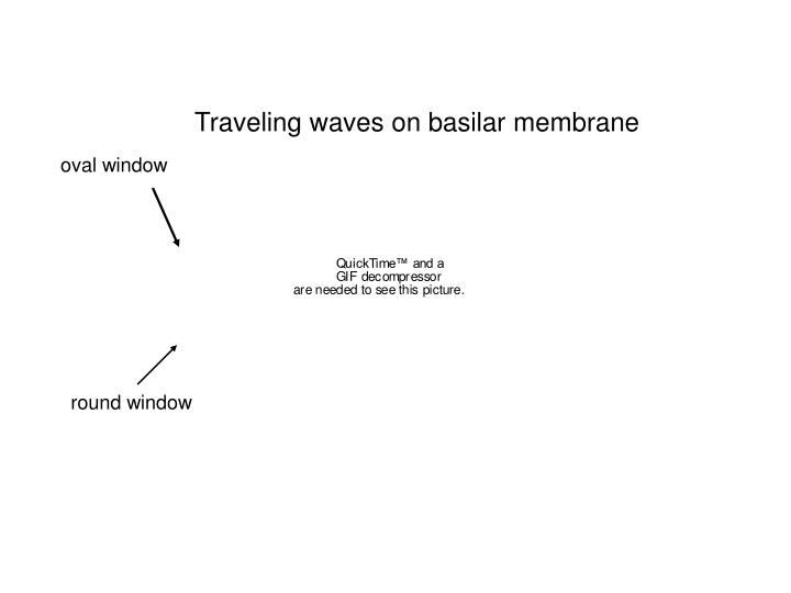 Traveling waves on basilar membrane