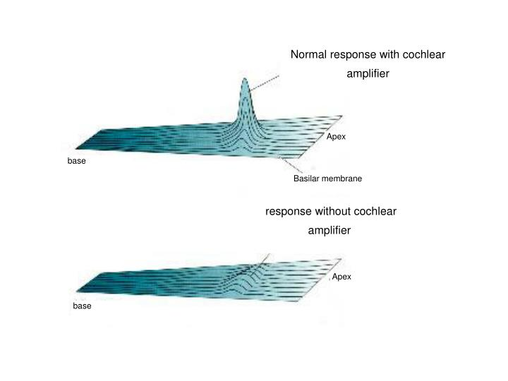 Normal response with cochlear amplifier