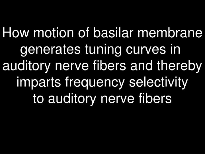How motion of basilar membrane