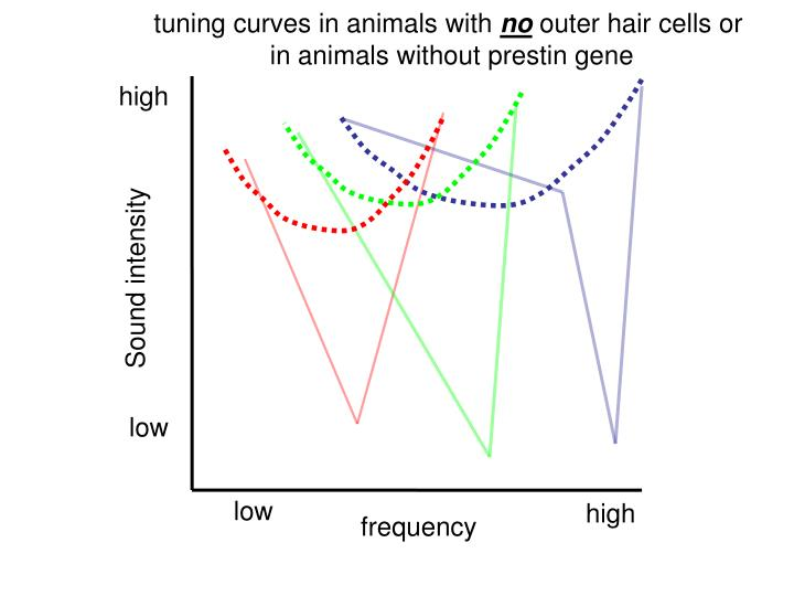 tuning curves in animals with