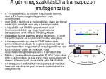 a g n megszak t st l a transzpozon mutagenezisig1