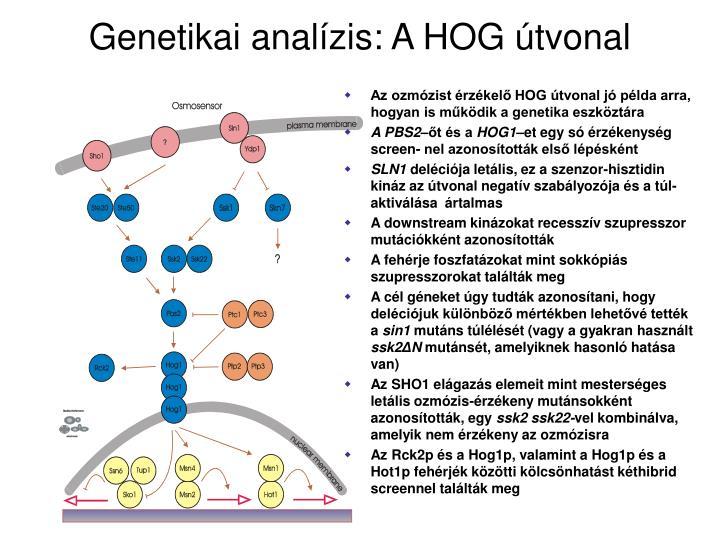 Genetikai analízis