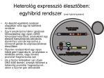 heterol g expresszi leszt ben egyhibrid rendszer one hybrid system