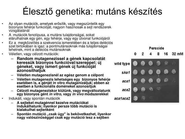 Élesztő genetika: mutáns készítés