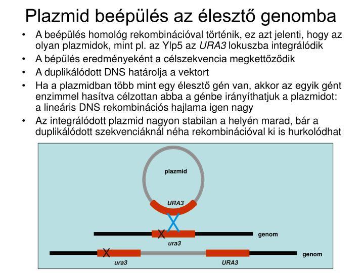 Plazmid beépülés az élesztő genomba
