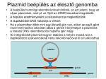 plazmid be p l s az leszt genomba