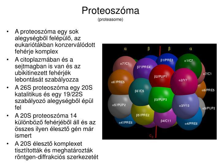 Proteoszóma