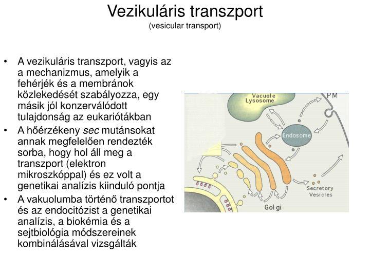 Vezikuláris transzport