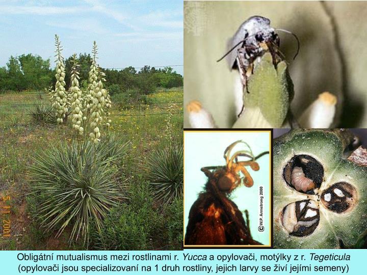 Obligátní mutualismus mezi rostlinami r.