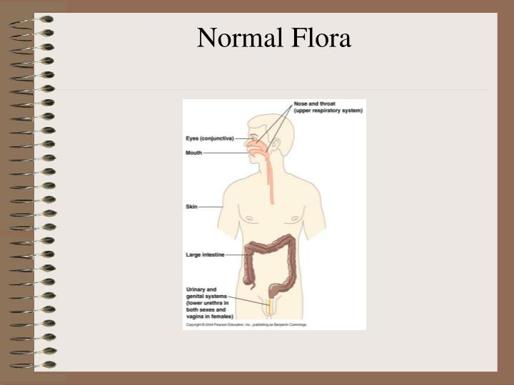 normal flora In this lesson, you're going to learn about the major difference between normal  and transient flora, as well as a couple examples of each and how.