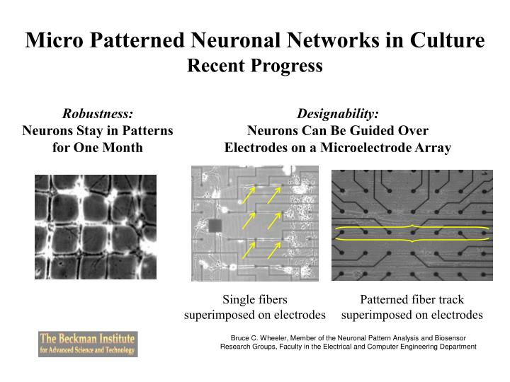 Micro Patterned Neuronal Networks in Culture