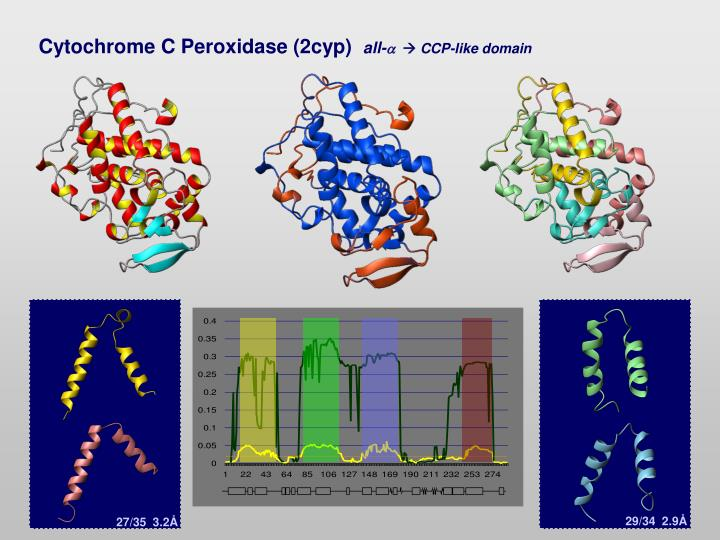 Cytochrome C Peroxidase (2cyp)