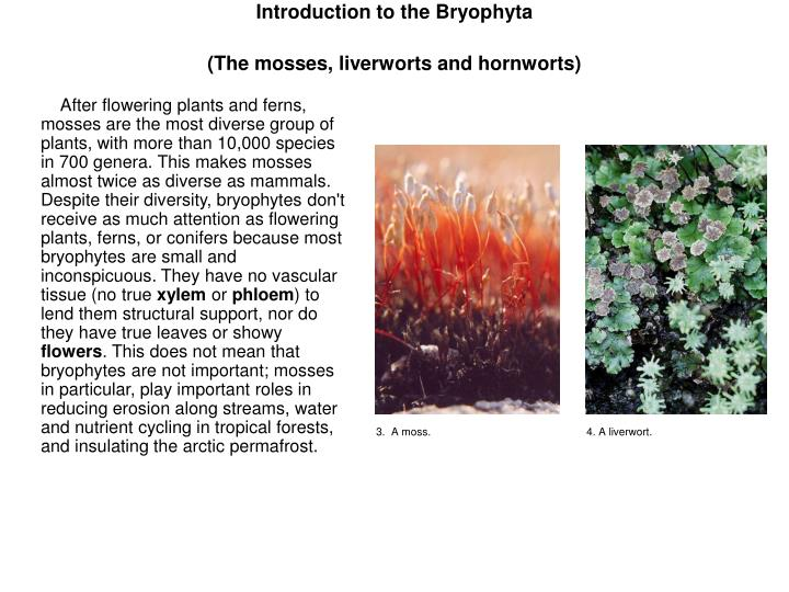 Introduction to the Bryophyta