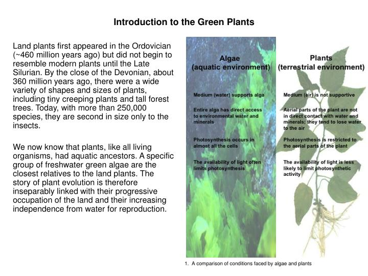 Introduction to the Green Plants