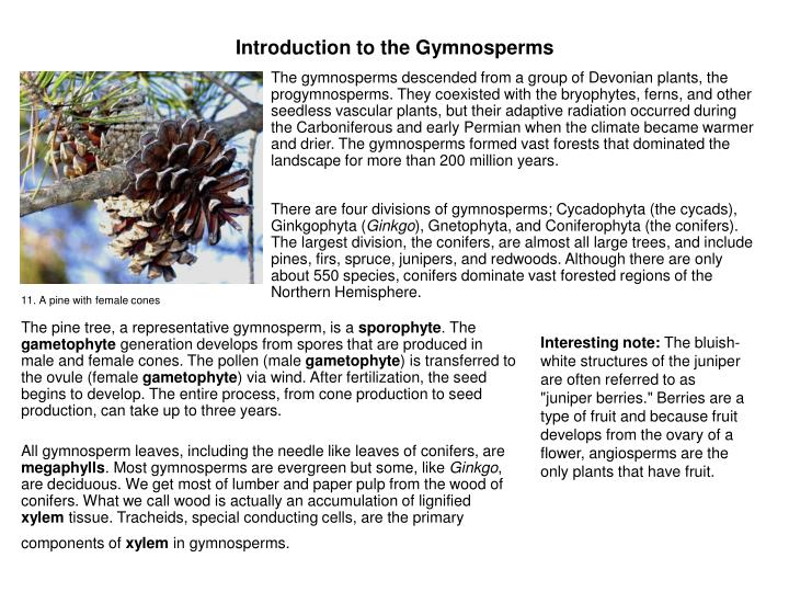 Introduction to the Gymnosperms
